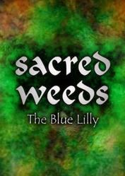 Sacred_Weeds_lilly.jpg