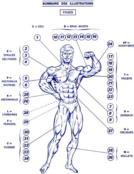 lucien demeill u00e9s - exercices de musculation