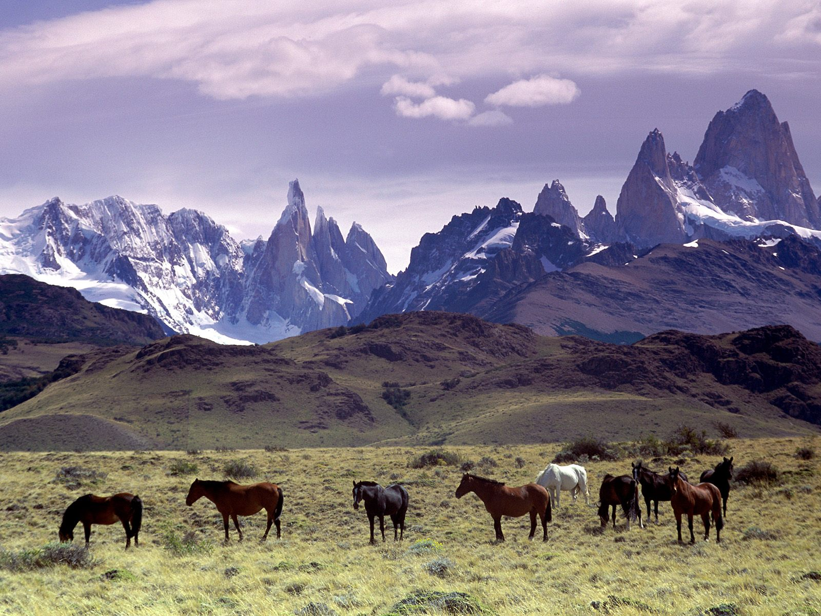 wild_andes_mountains_argentina_horse.jpg