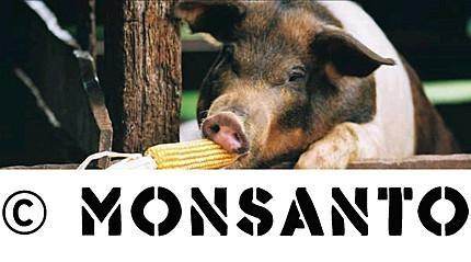 monsanto_patent_for_a_pig.jpg