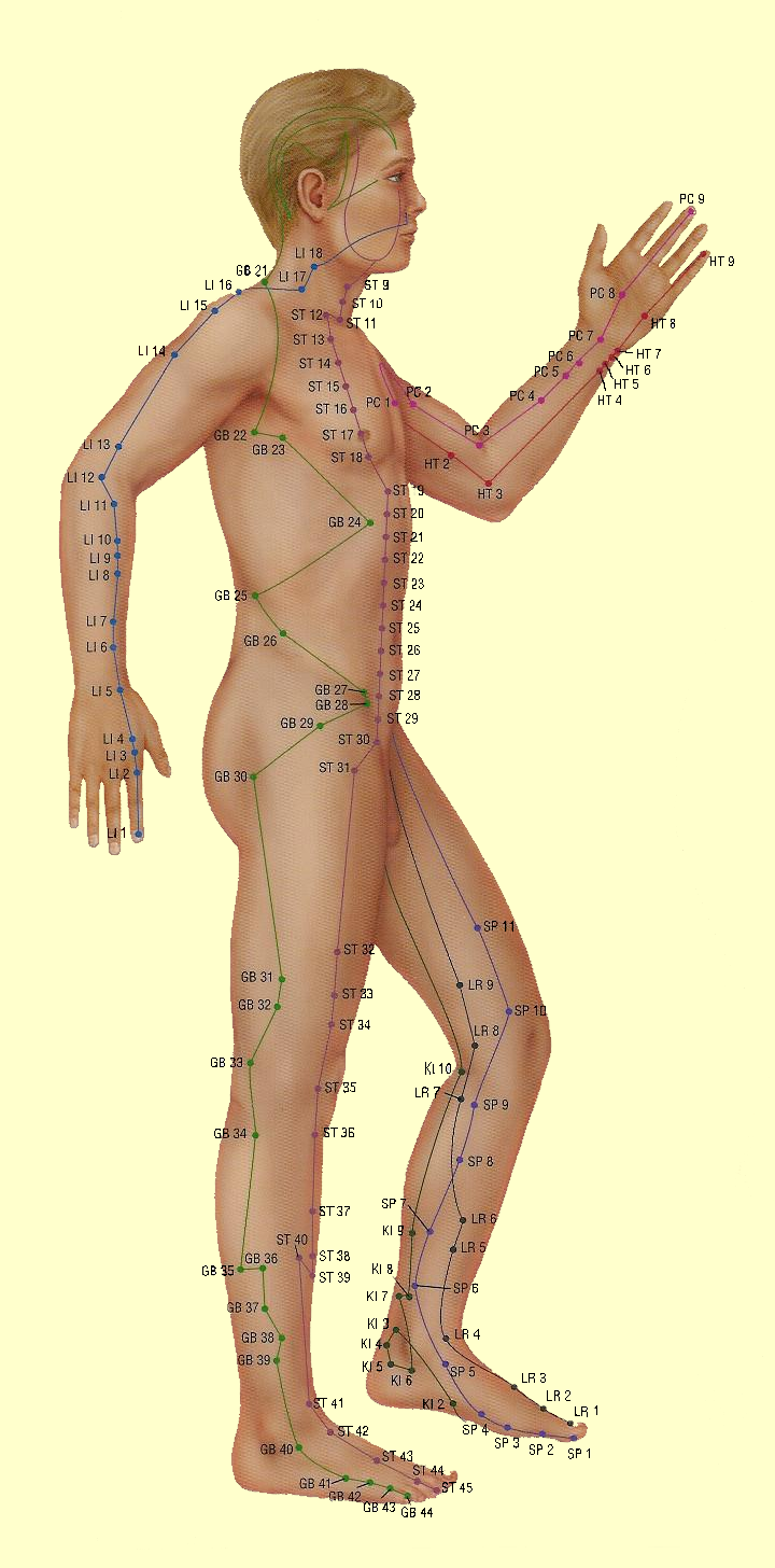 acupuncture_model3.png